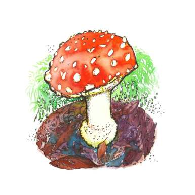 The-Perfect-Mushroom_ad